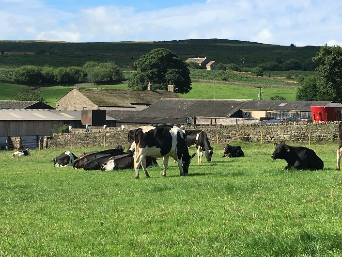 Free Range Dairy | Cows lying in field