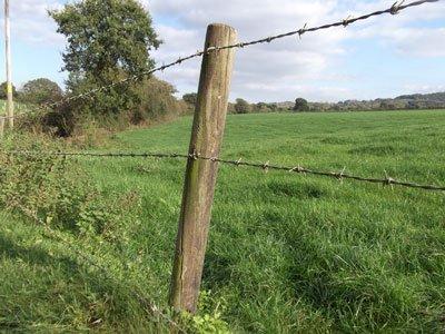 Free Range Dairy | Fence