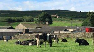 Free Range Dairy | Coates farm