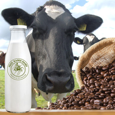 Free Range Dairy | Coffee and Cows Campaign